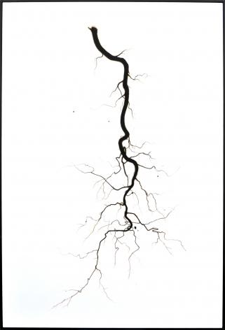BRIAN BORRELLO Root, 2013