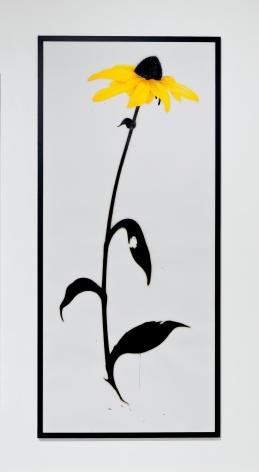 BRIAN BORRELLO, Cone Flower, 2011