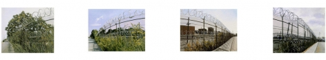 Four Spots Along a Razor-Wire Fence, August - November (ASOTSPRIE) (4 Part Painting), 1999, Oil on canvas