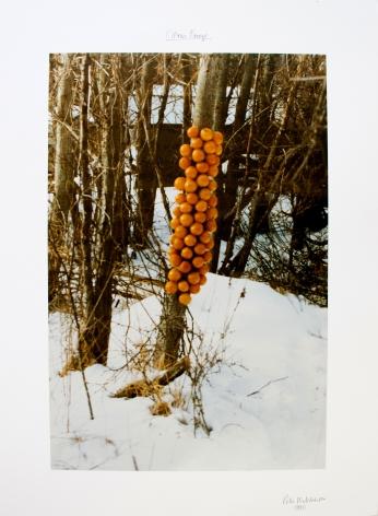 Hutchinson - Citrus Freeze