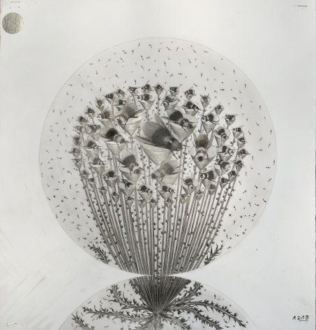 Hipkiss  Capitule 29, 2020  Graphite and silver ink on 220 g/m2 Fabriano 4 paper  42 x 40 cm / 16 1/2 x 15 3/4 in