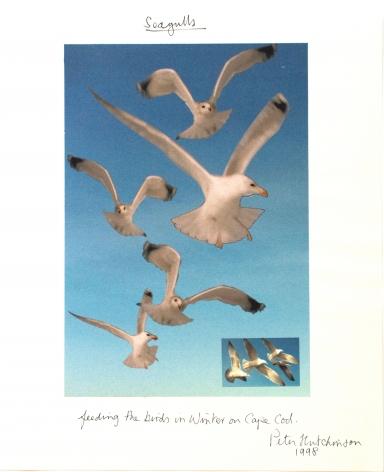 Hutchinson - Seagulls