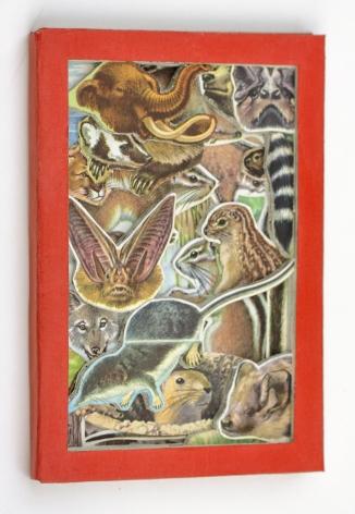 James Allen - Mammals