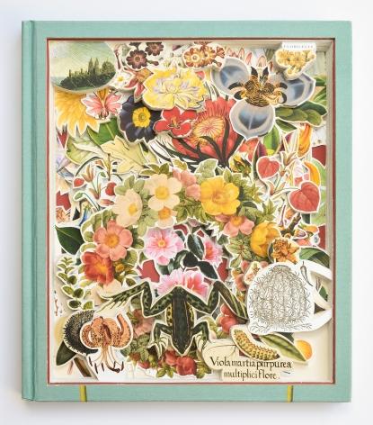 James Allen  Botanicals, 2020