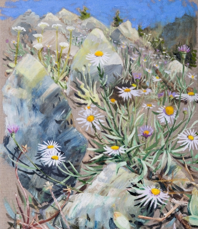 Russell - Alpine Aster