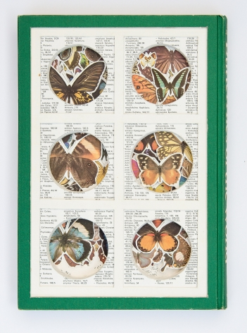 James Allen - Butterfly Habitat
