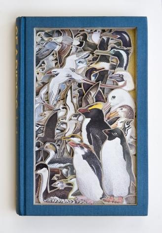 James Allen  Seabirds, 2021
