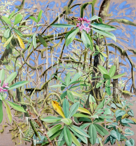 Russell - Rhododendron Reaching
