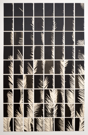 Bruno Roels: A Palm Tree is a Palm Tree is a Palm Tree, Howard Greenberg Gallery, 2018