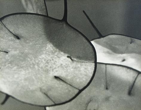 John Vanderpant - Honestly, Honesty, 1937 - Howard Greenberg Gallery