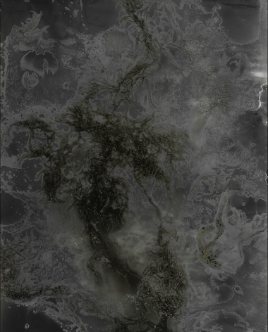 Madison Emond, Decaying Seaweed, Frozen Salt, 2019, Bard x HGG, Howard Greenberg Gallery, 2019
