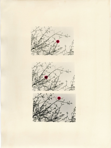 Bruno V. Roels - A Guide To Cherry Blossoms (Three Scarlet Dots) - 2019