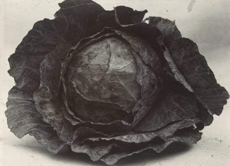 Charles Jones - Cabbage Colewort Rosette, c.1900 - Howard Greenberg Gallery