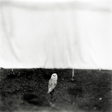 Keith Carter - Barn Owl, 1998 - Howard Greenberg Gallery