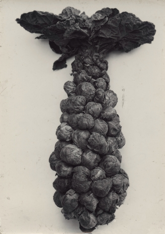 Charles Jones - Brussels Sprouts, c.1900 - Howard Greenberg Gallery