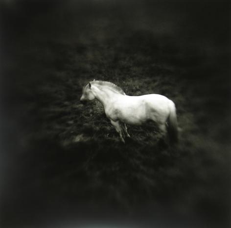 Keith Carter - Norwegian Pony #1, 2005 - Howard Greenberg Gallery