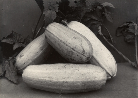 Charles Jones - Vegetable Marrow Long White, c.1900 - Howard Greenberg Gallery