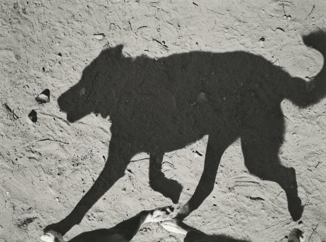 Thomas Roma - Dyker Dog Park #9, Brooklyn, NY, 2012 - Howard Greenberg Gallery