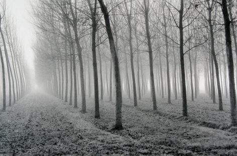Mark Citret - Poplars, Po River Valley, 1998 - Howard Greenberg Gallery