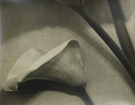 John Vanderpant - Untitled (floral rhythm variant), 1935 - Howard Greenberg Gallery