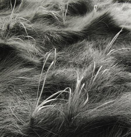 Eric Lindbloom - Salt Marsh Grass #50, Wellfleet , MA, 2006 - Howard Greenberg Gallery