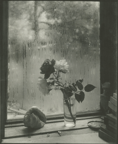 Josef Sudek, Last Rose, 1956, Bard x HGG, Howard Greenberg Gallery, 2019