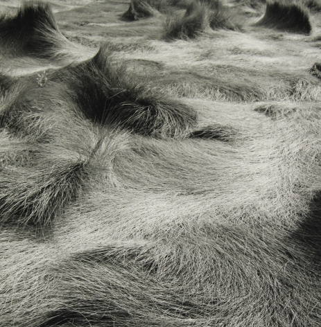 Eric Lindbloom - Salt Marsh Grass #30, Wellfleet, MA, 1999 - Howard Greenberg Gallery