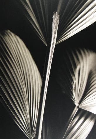 Kenro Izu: Still Life 2013 Howard Greenberg Gallery