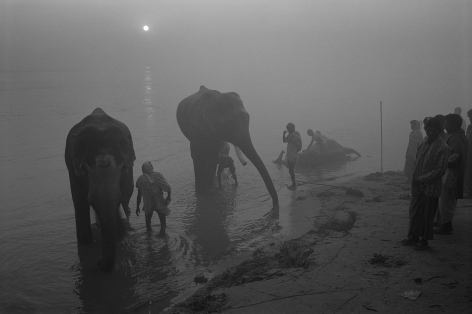 Don McCullin, Elephant Festival, The River Gandak, India, 1991, Howard Greenberg Gallery, 2019