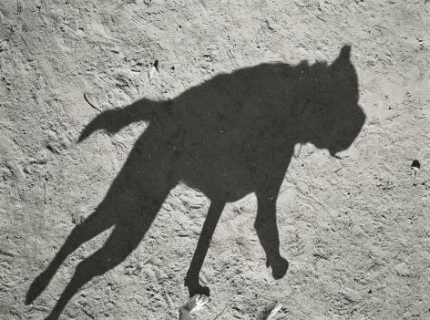 Thomas Roma - Dyker Dog Park #4, Brooklyn, NY, 2012 - Howard Greenberg Gallery