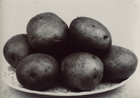 Charles Jones - Potato Northern Star, c.1900 - Howard Greenberg Gallery