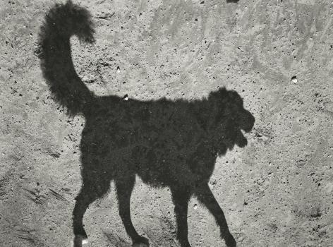 Thomas Roma - Dyker Dog Park #6, Brooklyn, NY, 2012 - Howard Greenberg Gallery