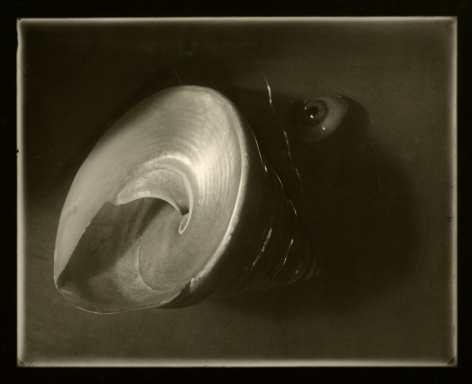 Josef Sudek - Shell and Eyeball Arrangement from Memories Cycle, 1956 - Howard Greenberg Gallery