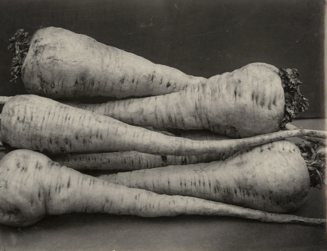Charles Jones - Parsnip Student, c.1900- Howard Greenberg Gallery