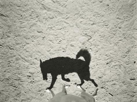 Thomas Roma - Dyker Dog Park #18, Brooklyn, NY, 2013 - Howard Greenberg Gallery