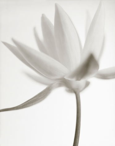 Yumiko Izu - Secret Garden Blanc 111, 2011 - Howard Greenberg Gallery