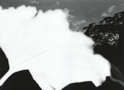 "Ray K. Metzker - 80 DA-21, from ""Pictus Interruptus"", 1980 - Howard Greenberg Gallery - 2018"