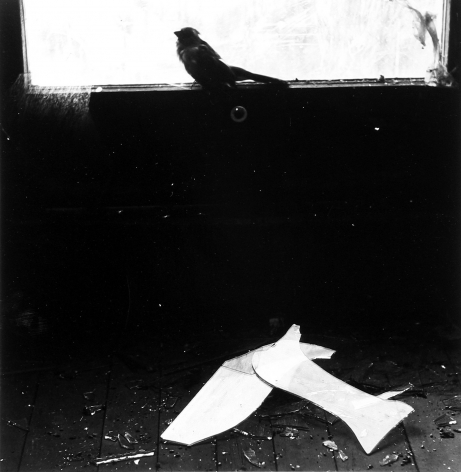 Ralph Eugene Meatyard, Untitled (bird on window ledge), 1966, Bard x HGG, Howard Greenberg Gallery, 2019
