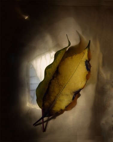 Attachments # 3    from LEAVES series A 2015