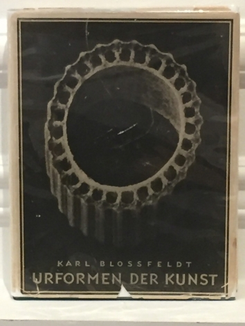 Karl Blossfeldt (German, 1865-1932)