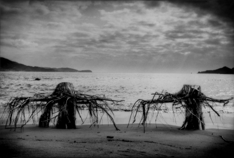 James Whitlow Delano, Black Tsunami, The sea undercuts roots beneath the sumps of trees on the beach, Rikuzen-Takata, Iwate Prefecture, 2011, Sous Les Etoiles Gallery