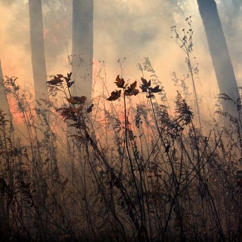 Jane Fulton Alt, Burn No. 19, fire, landscape, Sous Les Etoiles Gallery