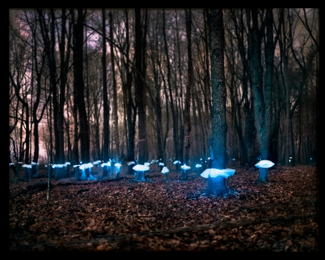 Barry Underwood, This Land is Your Land, Sirna Woods, 2016, Sous Les Etoiles Gallery