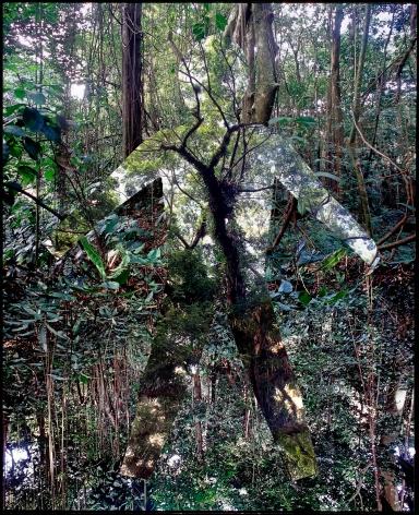 Max Ruiz, Cimarron, Banguio, 2008, Sous Les Etoiles Gallery