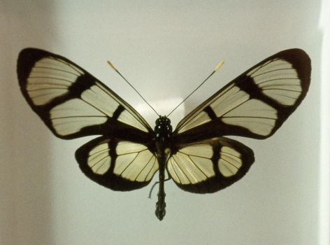 Susanne Wellm, Danish artist,  Butterfly, Copenhagen, Sous Les Etoiles Gallery, New York