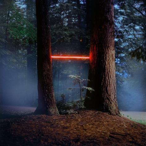 Barry Underwood, Scenes, Tree (MacDowell), 2013, Sous Les Etoiles Gallery