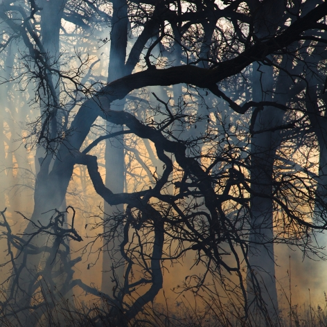 Jane Fulton Alt, Burn No. 53, 2011, fire, landscape, Sous Les Etoiles Gallery