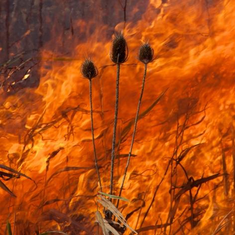 Jane Fulton Alt, Burn No. 92, 2011, fire, landscape, Sous Les Etoiles Gallery