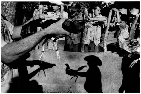 Ernesto Bazan, Cuba, Fidel Castro, Havana, cock-fighting 1995, Sous Les Etoiles Gallery, New York