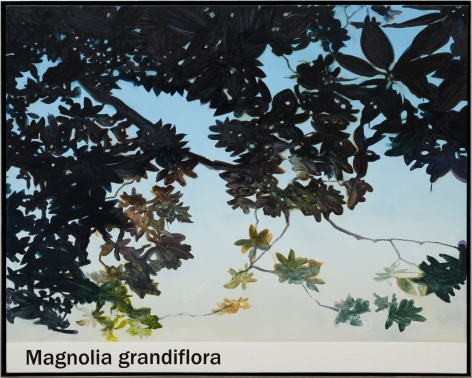 Rob Reynolds  Magnolia, 2021  Oil, alkyd and acrylic polymer paint on canvas in welded aluminum artist's frame  Framed Dimensions:  48 3/4 x 60 3/4 inches